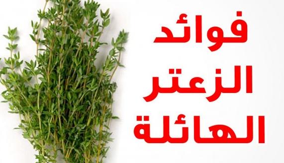 الفوائد المذهلة لنبات الزعتر في انقاص الوزن