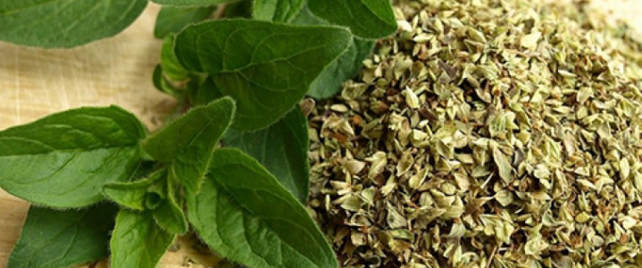فوائد نبات الاوريجانو الصحية